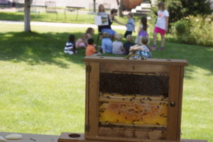 Children learning about a beehive